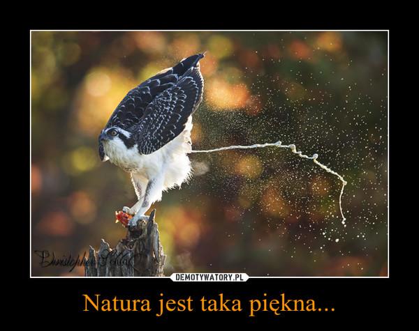 Natura jest taka piękna... –
