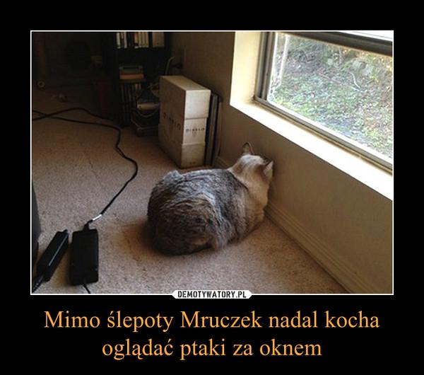 Mimo ślepoty Mruczek nadal kocha oglądać ptaki za oknem –