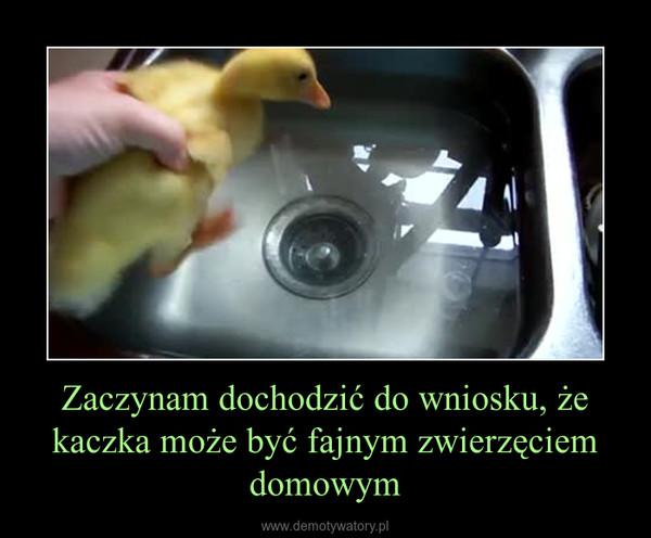 Zaczynam dochodzić do wniosku, że kaczka może być fajnym zwierzęciem domowym –