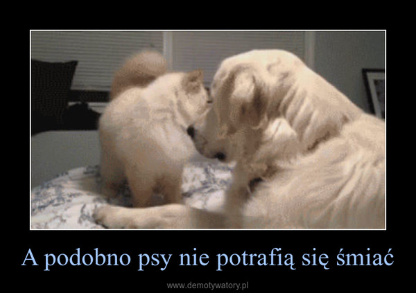 A podobno psy nie potrafią się śmiać –