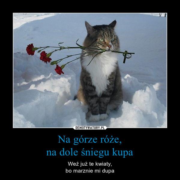 Na górze róże,na dole śniegu kupa – Weź już te kwiaty,bo marznie mi dupa