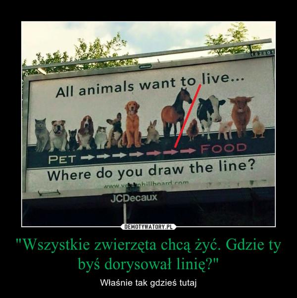 """""""Wszystkie zwierzęta chcą żyć. Gdzie ty byś dorysował linię?"""" – Właśnie tak gdzieś tutaj"""