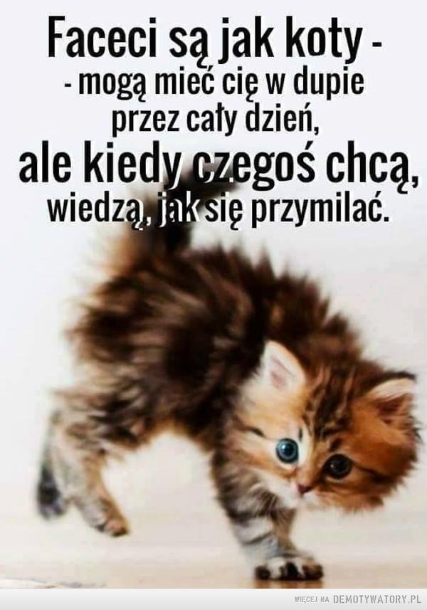 Faceci jak koty –