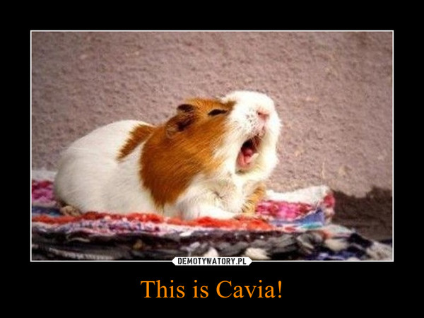 This is Cavia! –