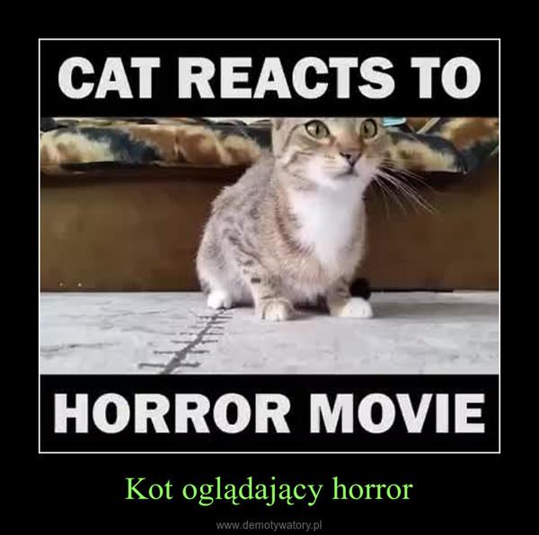 Kot oglądający horror –
