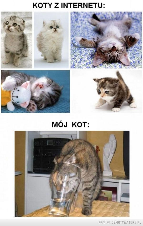Kot tymczasem –