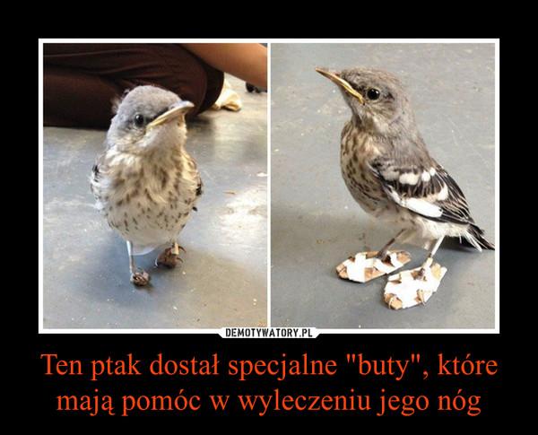 """Ten ptak dostał specjalne """"buty"""", które mają pomóc w wyleczeniu jego nóg –"""