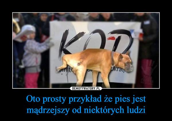 Oto prosty przykład że pies jest mądrzejszy od niektórych ludzi –