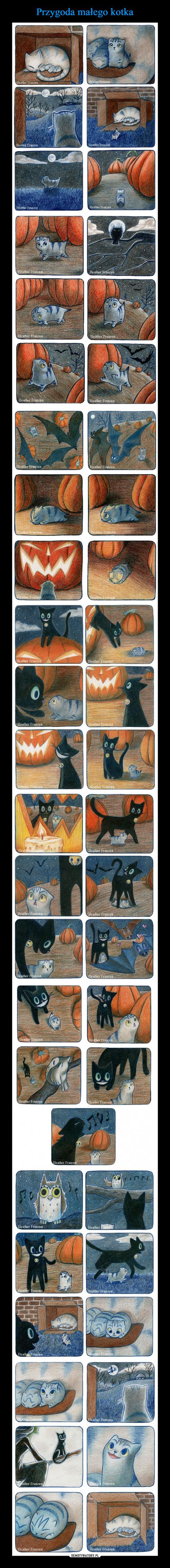 Przygoda małego kotka