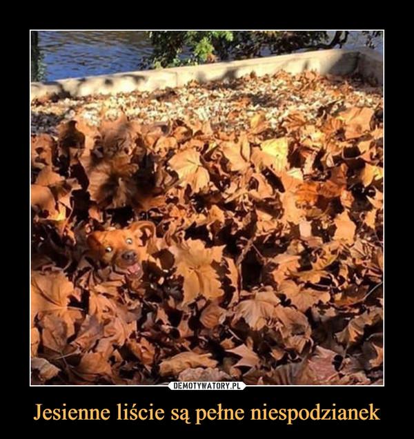 Jesienne liście są pełne niespodzianek –