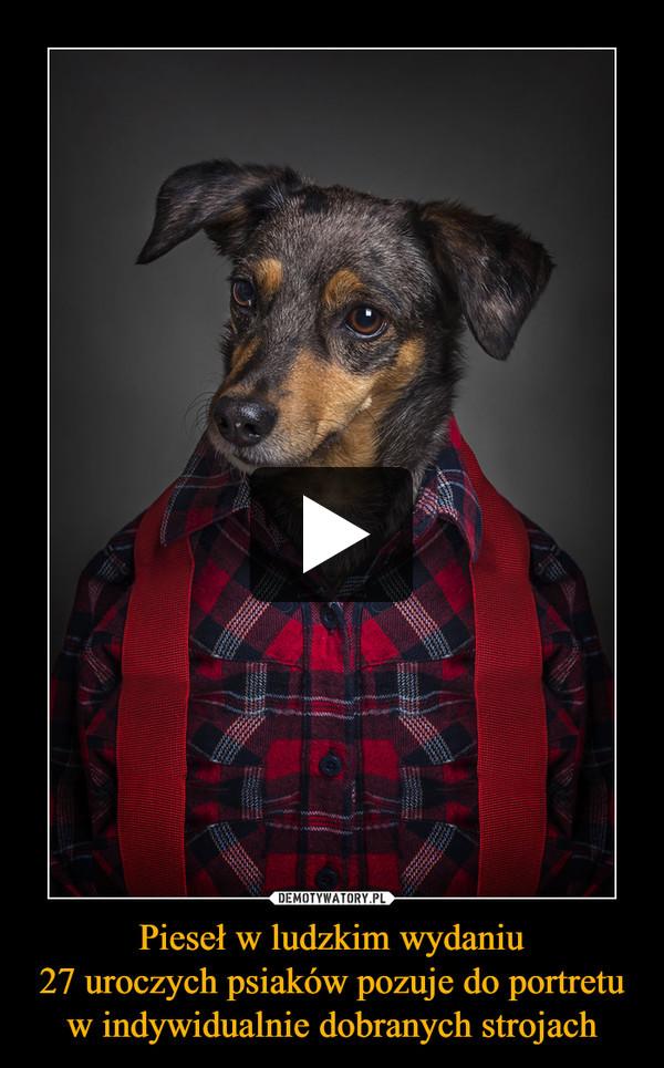 Pieseł w ludzkim wydaniu27 uroczych psiaków pozuje do portretu w indywidualnie dobranych strojach –