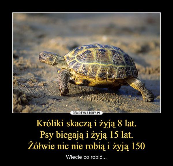 Króliki skaczą i żyją 8 lat.Psy biegają i żyją 15 lat.Żółwie nic nie robią i żyją 150 – Wiecie co robić...
