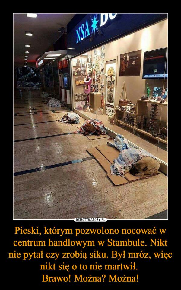 Pieski, którym pozwolono nocować w centrum handlowym w Stambule. Nikt nie pytał czy zrobią siku. Był mróz, więc nikt się o to nie martwił. Brawo! Można? Można! –