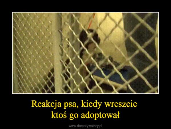 Reakcja psa, kiedy wreszcie ktoś go adoptował –