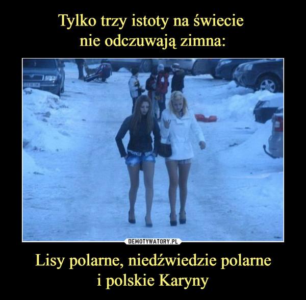 Lisy polarne, niedźwiedzie polarnei polskie Karyny –