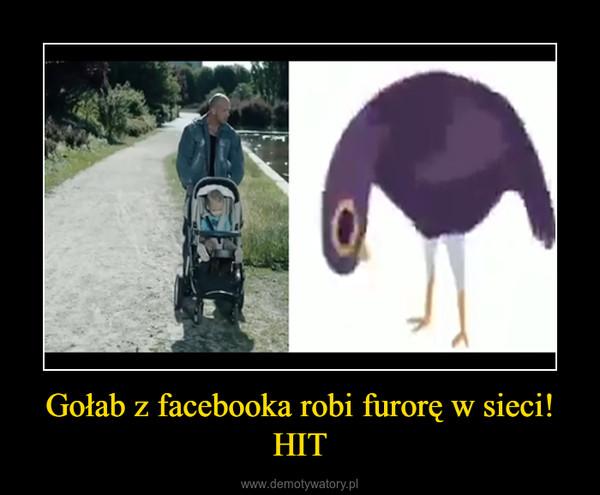Gołab z facebooka robi furorę w sieci! HIT –