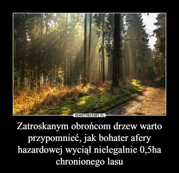 Zatroskanym obrońcom drzew warto przypomnieć, jak bohater afery hazardowej wyciął nielegalnie 0,5ha chronionego lasu –