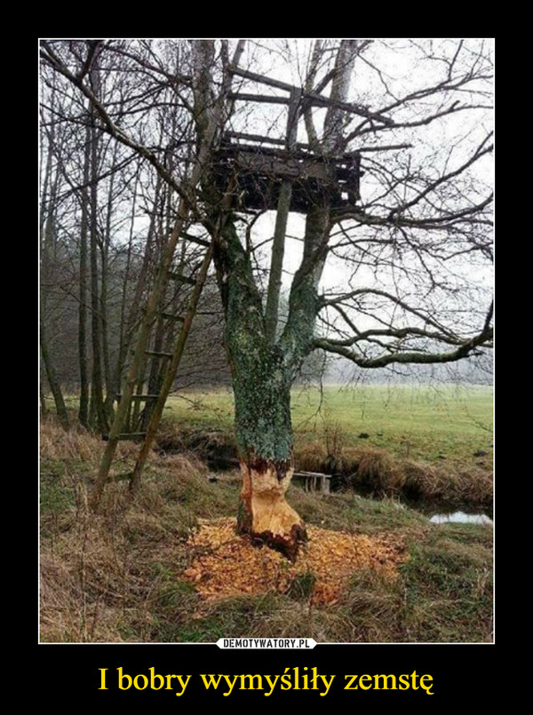 I bobry wymyśliły zemstę –