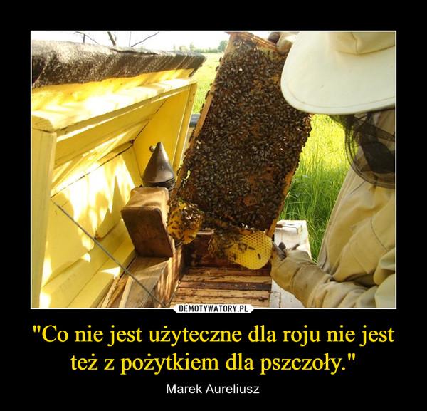 """""""Co nie jest użyteczne dla roju nie jest też z pożytkiem dla pszczoły."""" – Marek Aureliusz"""