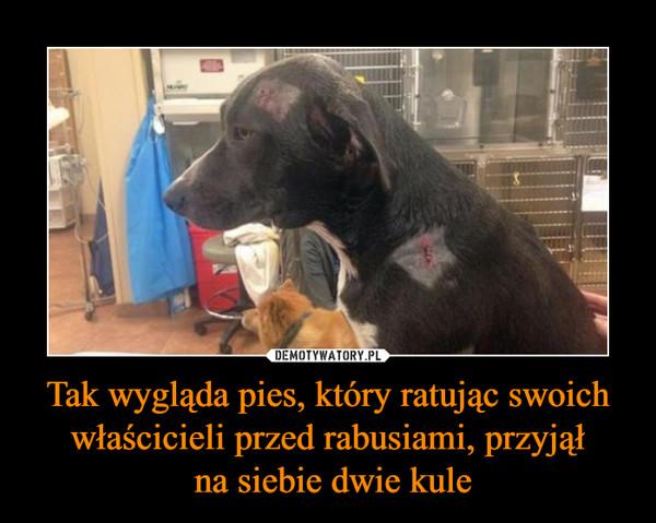 Tak wygląda pies, który ratując swoich właścicieli przed rabusiami, przyjął na siebie dwie kule –