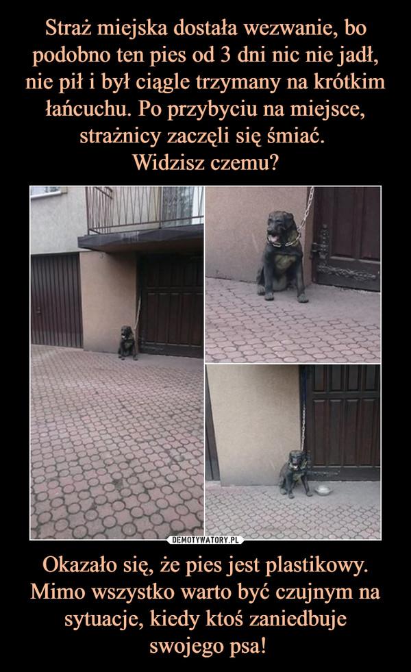 Okazało się, że pies jest plastikowy. Mimo wszystko warto być czujnym na sytuacje, kiedy ktoś zaniedbuje swojego psa! –