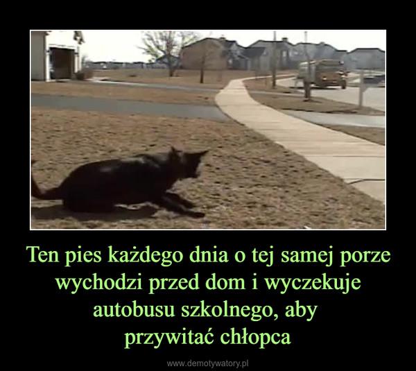 Ten pies każdego dnia o tej samej porze wychodzi przed dom i wyczekuje autobusu szkolnego, aby przywitać chłopca –