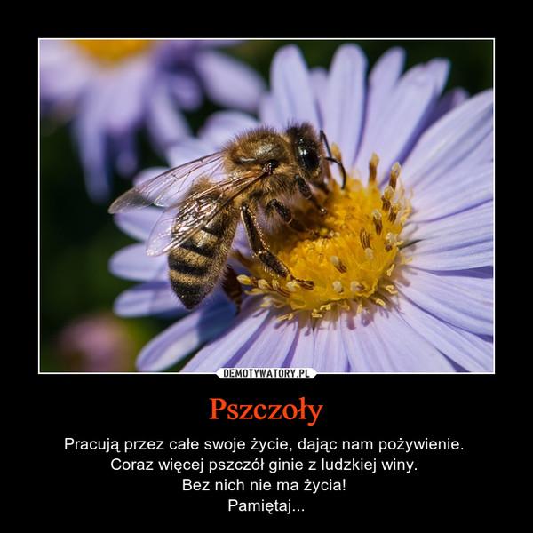 Pszczoły – Pracują przez całe swoje życie, dając nam pożywienie. Coraz więcej pszczół ginie z ludzkiej winy. Bez nich nie ma życia! Pamiętaj...