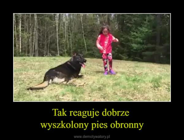 Tak reaguje dobrze wyszkolony pies obronny –