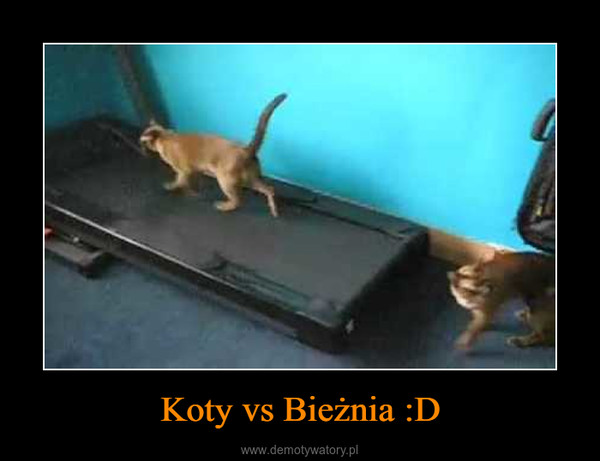 Koty vs Bieżnia :D –