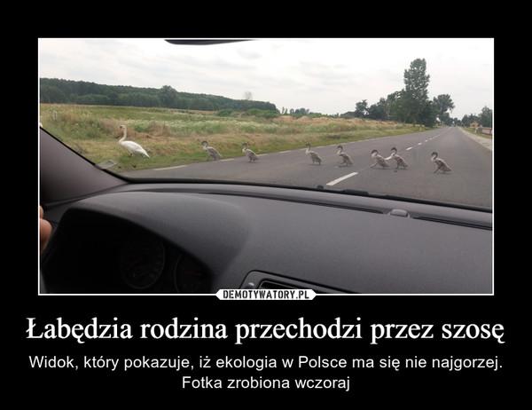 Łabędzia rodzina przechodzi przez szosę – Widok, który pokazuje, iż ekologia w Polsce ma się nie najgorzej. Fotka zrobiona wczoraj