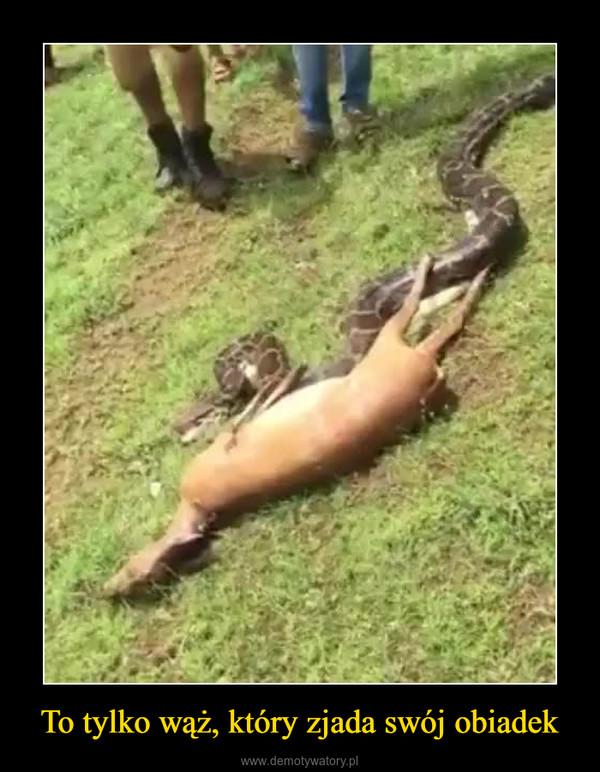 To tylko wąż, który zjada swój obiadek –