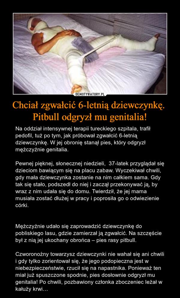 Chciał zgwałcić 6-letnią dziewczynkę. Pitbull odgryzł mu genitalia! – Na oddział intensywnej terapii tureckiego szpitala, trafił pedofil, tuż po tym, jak próbował zgwałcić 6-letnią dziewczynkę. W jej obronię stanął pies, który odgryzł mężczyźnie genitalia.Pewnej pięknej, słonecznej niedzieli,  37-latek przyglądał się dzieciom bawiącym się na placu zabaw. Wyczekiwał chwili, gdy mała dziewczynka zostanie na nim całkiem sama. Gdy tak się stało, podszedł do niej i zaczął przekonywać ją, by wraz z nim udała się do domu. Twierdził, że jej mama musiała zostać dłużej w pracy i poprosiła go o odwiezienie córki.Mężczyźnie udało się zaprowadzić dziewczynkę do pobliskiego lasu, gdzie zamierzał ją zgwałcić. Na szczęście był z nią jej ukochany obrońca – pies rasy pitbull.Czworonożny towarzysz dziewczynki nie wahał się ani chwili i gdy tylko zorientował się, że jego podopieczna jest w niebezpieczeństwie, rzucił się na napastnika. Ponieważ ten miał już spuszczone spodnie, pies dosłownie odgryzł mu genitalia! Po chwili, pozbawiony członka zboczeniec leżał w kałuży krwi…