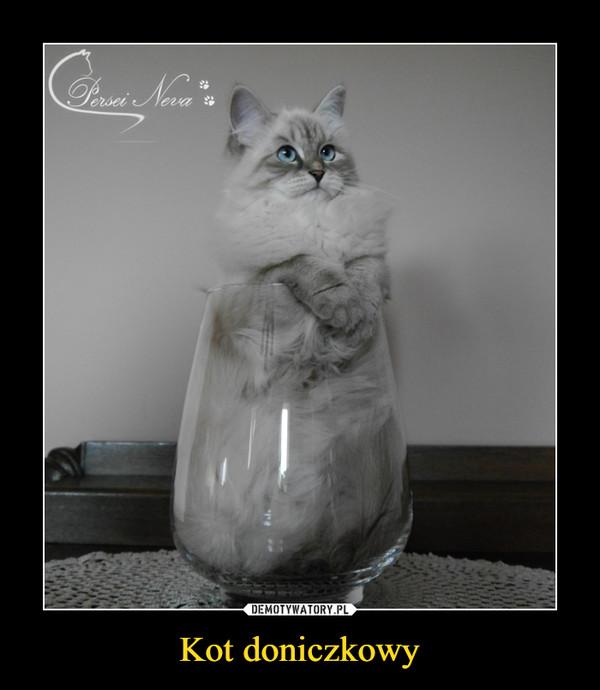 Kot doniczkowy –