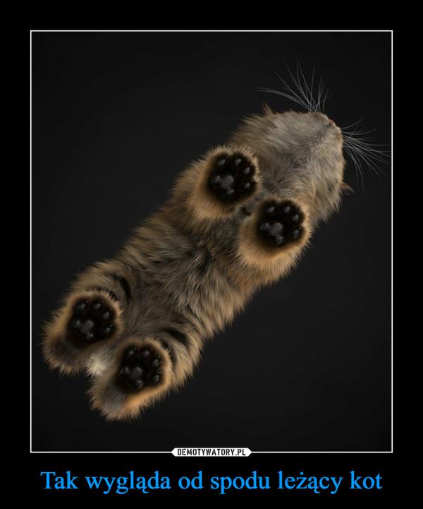 Tak wygląda od spodu leżący kot –