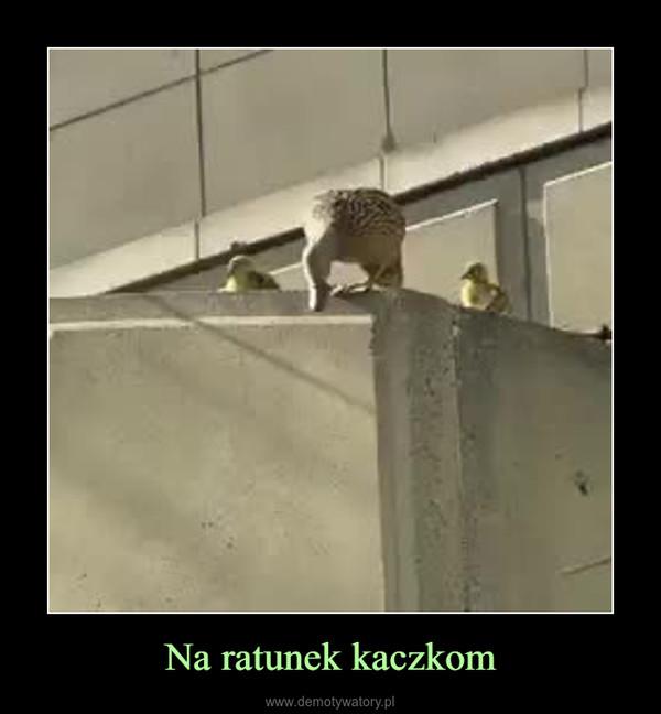 Na ratunek kaczkom –