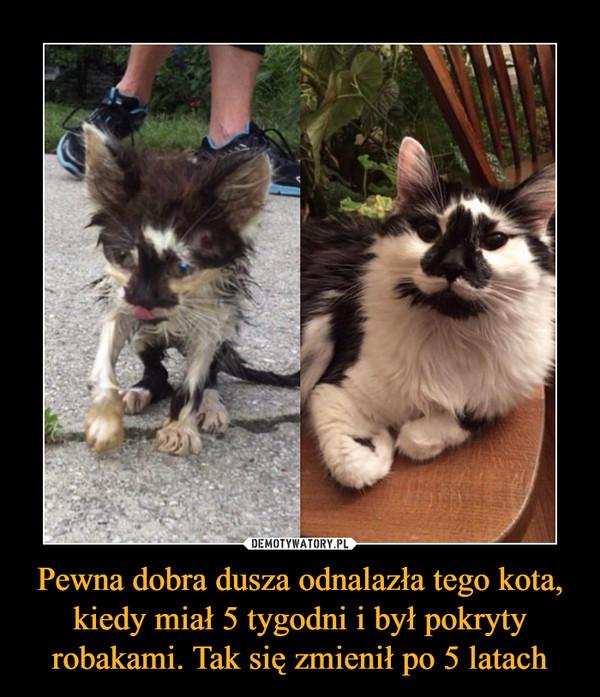 Pewna dobra dusza odnalazła tego kota, kiedy miał 5 tygodni i był pokryty robakami. Tak się zmienił po 5 latach –