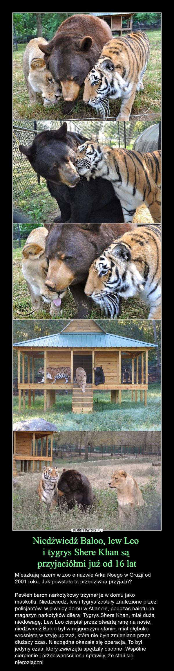 Niedźwiedź Baloo, lew Leo i tygrys Shere Khan są przyjaciółmi już od 16 lat – Mieszkają razem w zoo o nazwie Arka Noego w Gruzji od 2001 roku. Jak powstała ta przedziwna przyjaźń? Pewien baron narkotykowy trzymał je w domu jako maskotki. Niedźwiedź, lew i tygrys zostały znalezione przez policjantów, w piwnicy domu w Atlancie, podczas nalotu na magazyn narkotyków dilera. Tygrys Shere Khan, miał dużą niedowagę, Lew Leo cierpiał przez otwartą ranę na nosie, niedźwiedź Baloo był w najgorszym stanie, miał głęboko wrośniętą w szyję uprząż, która nie była zmieniana przez dłuższy czas. Niezbędna okazała się operacja. To był jedyny czas, który zwierzęta spędziły osobno. Wspólne cierpienie i przeciwności losu sprawiły, że stali się nierozłączni