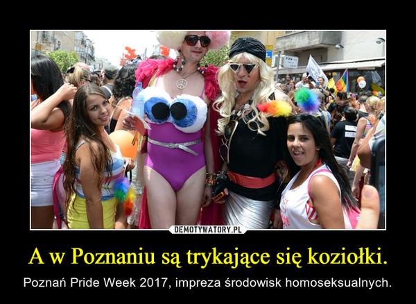 A w Poznaniu są trykające się koziołki. – Poznań Pride Week 2017, impreza środowisk homoseksualnych.