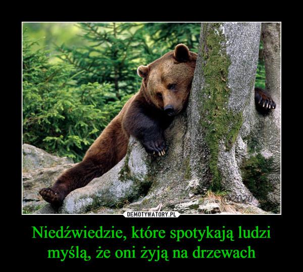 Niedźwiedzie, które spotykają ludzi myślą, że oni żyją na drzewach –