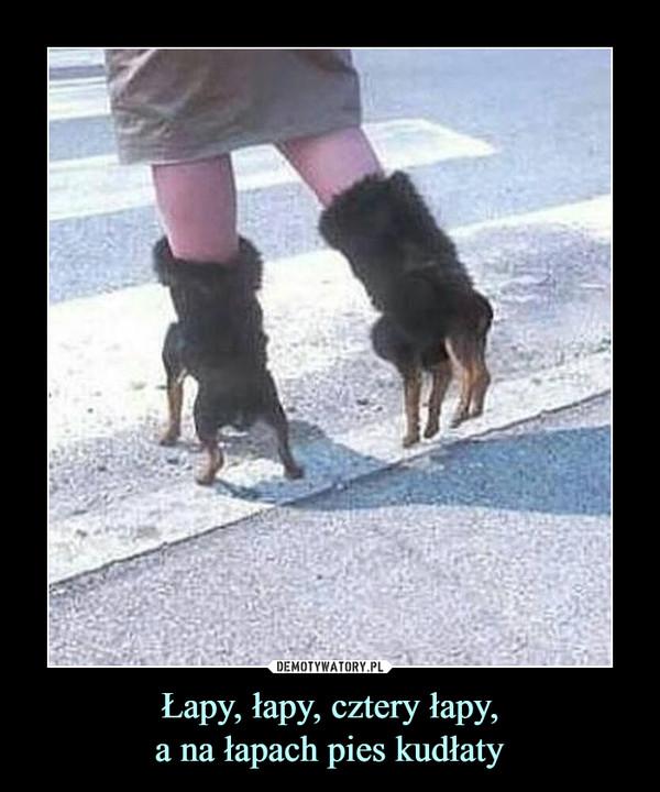 Łapy, łapy, cztery łapy,a na łapach pies kudłaty –