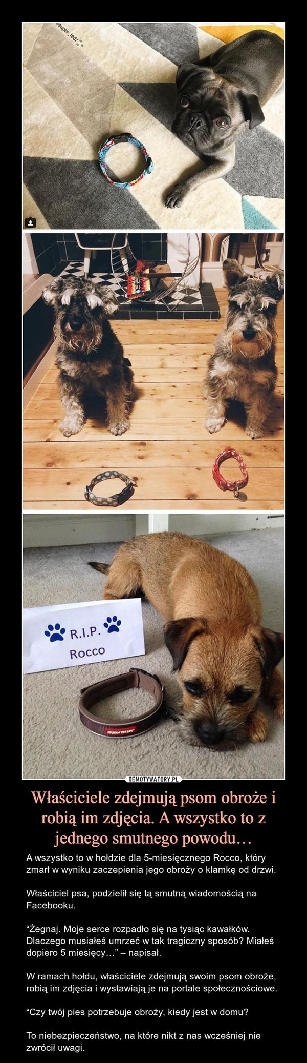 """Właściciele zdejmują psom obroże i robią im zdjęcia. A wszystko to z jednego smutnego powodu… – A wszystko to w hołdzie dla 5-miesięcznego Rocco, który zmarł w wyniku zaczepienia jego obroży o klamkę od drzwi.Właściciel psa, podzielił się tą smutną wiadomością na Facebooku.""""Żegnaj. Moje serce rozpadło się na tysiąc kawałków. Dlaczego musiałeś umrzeć w tak tragiczny sposób? Miałeś dopiero 5 miesięcy…"""" – napisał.W ramach hołdu, właściciele zdejmują swoim psom obroże, robią im zdjęcia i wystawiają je na portale społecznościowe.""""Czy twój pies potrzebuje obroży, kiedy jest w domu?To niebezpieczeństwo, na które nikt z nas wcześniej nie zwrócił uwagi."""