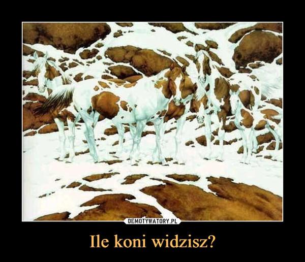 Ile koni widzisz? –