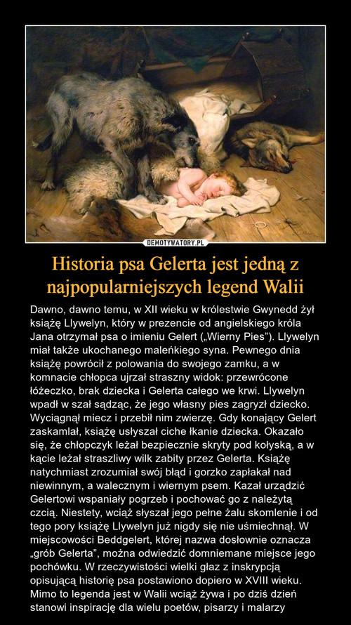 Historia psa Gelerta jest jedną z najpopularniejszych legend Walii