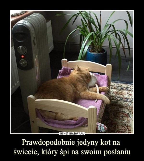 Prawdopodobnie jedyny kot na świecie, który śpi na swoim posłaniu –