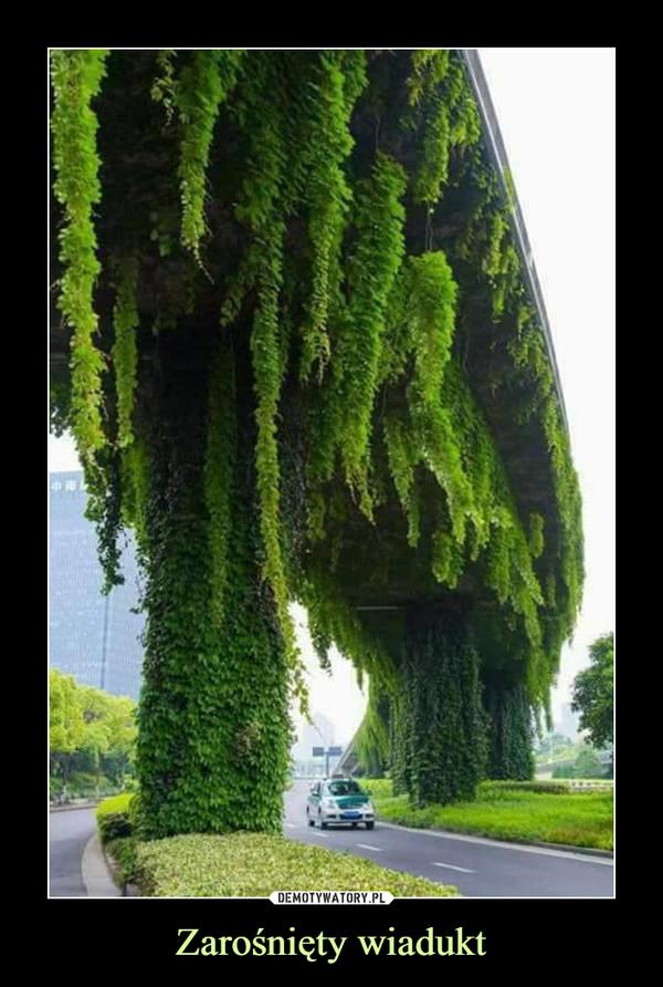 Zarośnięty wiadukt –