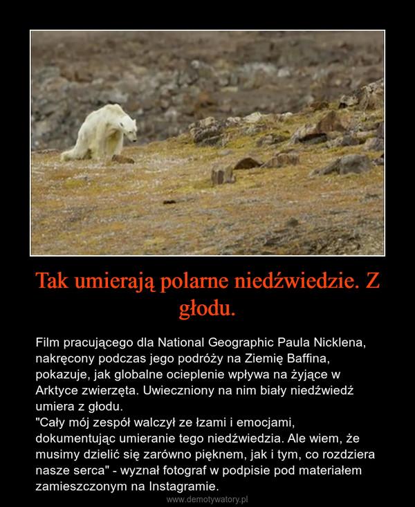 """Tak umierają polarne niedźwiedzie. Z głodu. – Film pracującego dla National Geographic Paula Nicklena, nakręcony podczas jego podróży na Ziemię Baffina, pokazuje, jak globalne ocieplenie wpływa na żyjące w Arktyce zwierzęta. Uwieczniony na nim biały niedźwiedź umiera z głodu.""""Cały mój zespół walczył ze łzami i emocjami, dokumentując umieranie tego niedźwiedzia. Ale wiem, że musimy dzielić się zarówno pięknem, jak i tym, co rozdziera nasze serca"""" - wyznał fotograf w podpisie pod materiałem zamieszczonym na Instagramie."""