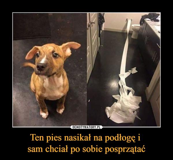 Ten pies nasikał na podłogę i sam chciał po sobie posprzątać –