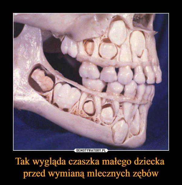 Tak wygląda czaszka małego dziecka przed wymianą mlecznych zębów –