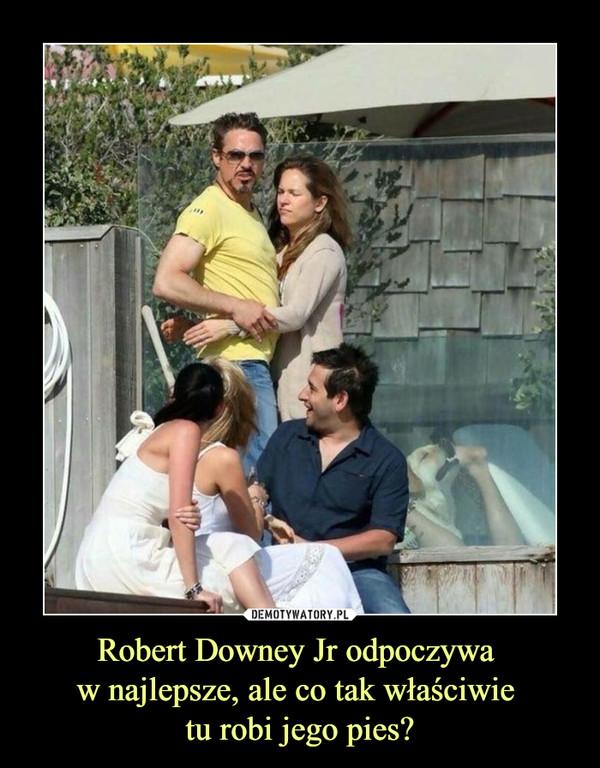 Robert Downey Jr odpoczywa w najlepsze, ale co tak właściwie tu robi jego pies? –