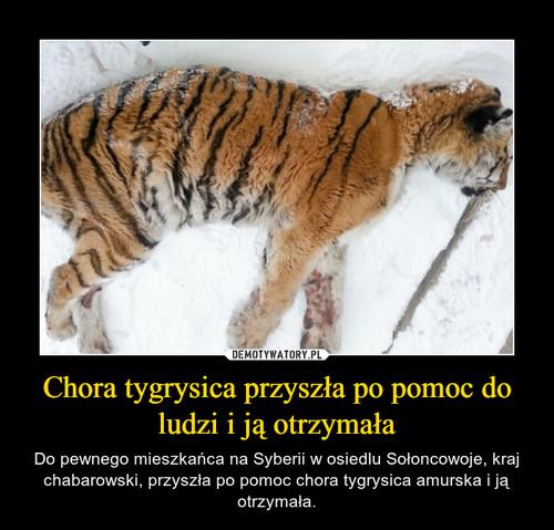 Chora tygrysica przyszła po pomoc do ludzi i ją otrzymała